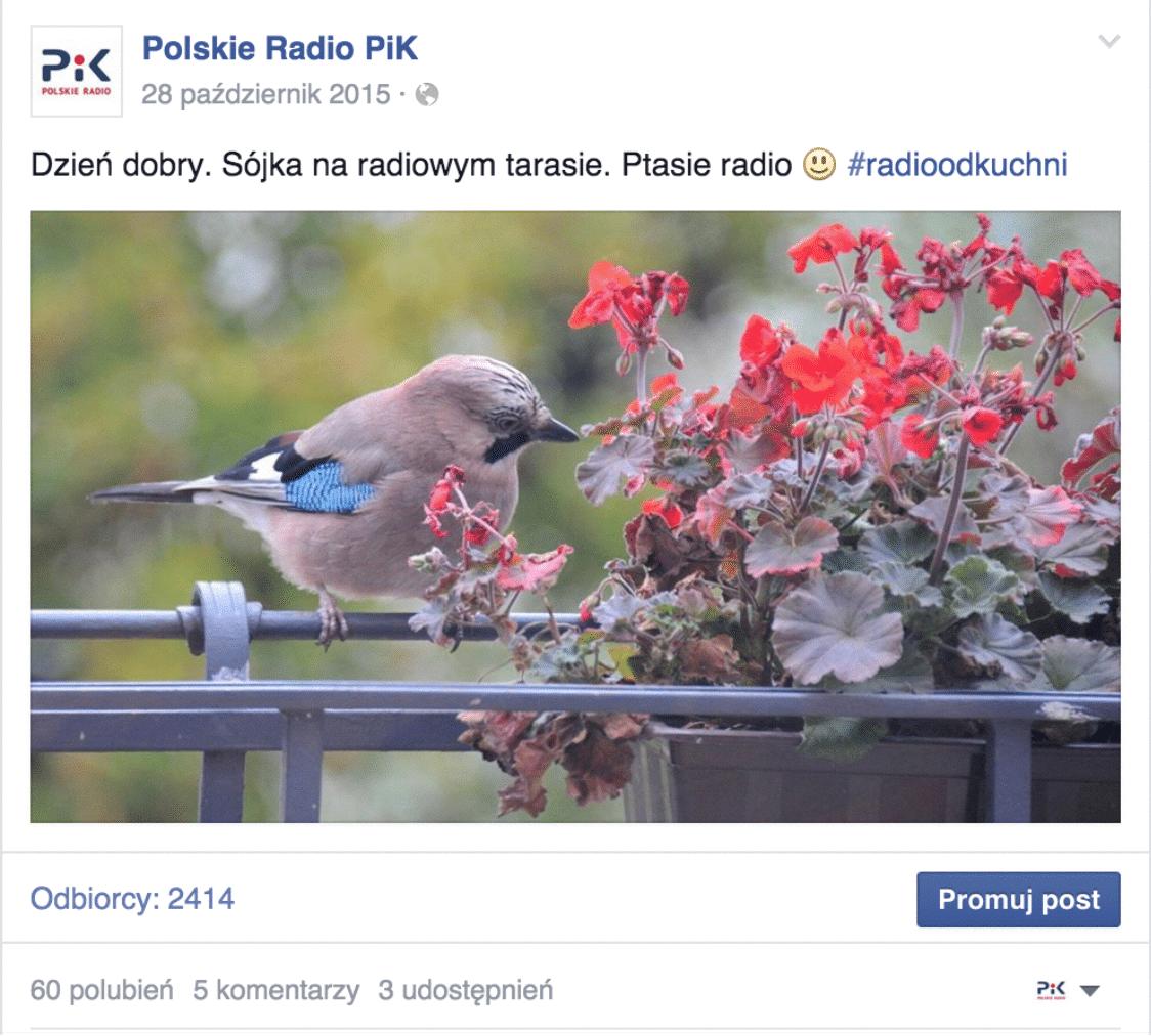Cykle – radio PIK